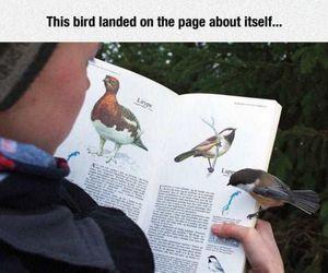 bird, nature, and animals image