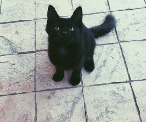 black, cats, and eyes image