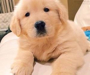 dog, lindo, and cute image