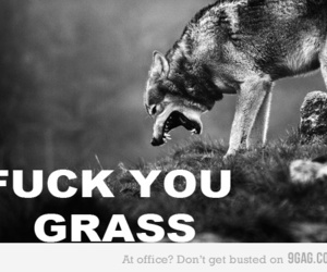 funny, grass, and wolf image