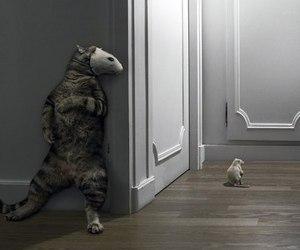 cat and rat image