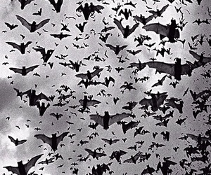 bats, bat, and black and white image