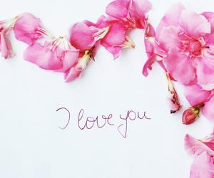 rose, love, and feminine image
