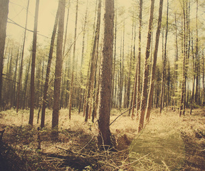 forrest, where the wild things are, and wood image
