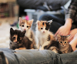 adorable, kitten, and kitty image