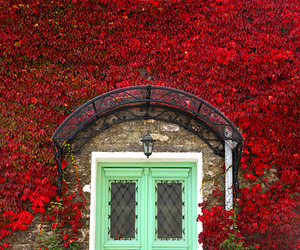 door, ivy, and france image