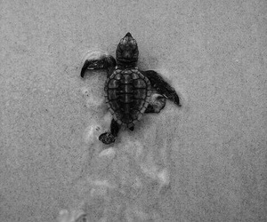 turtle, animal, and beach image