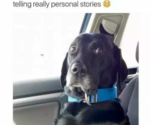 funny, dog, and quotes image
