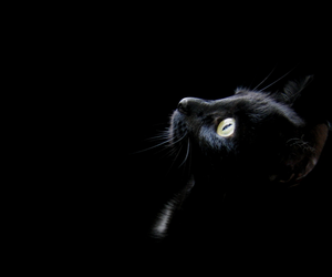 black, colour, and cat image