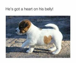 cute, heart, and dog image