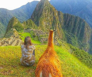 llama, machu picchu, and travel image