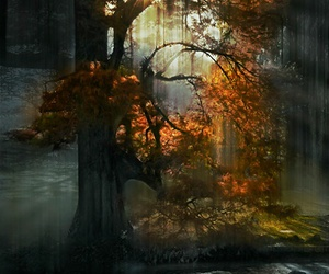 autumn, branches, and colourful image
