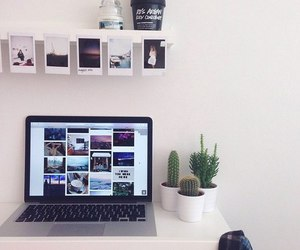 room, cactus, and decor image