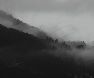 b&w, foggy, and pines image