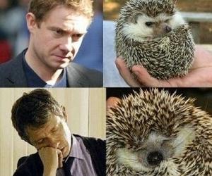 hedgehog and Martin Freeman image