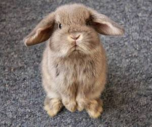 cute, bunny, and rabbit image