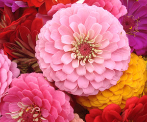 colors, pink, and flowers image