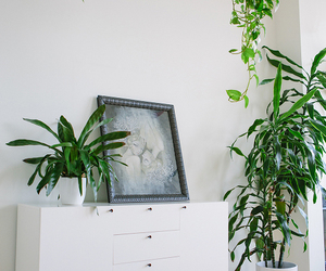 home decor, home decoration, and indoor plants image