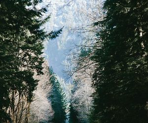 road, forest, and indie image
