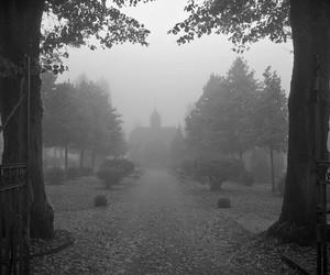 fog, trees, and autumn image