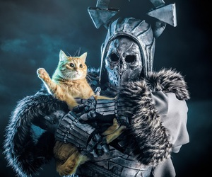 bizarre, cat, and cosplay image