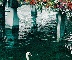 beautiful, indie, and Swan image