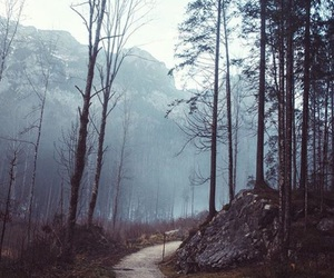 background, dark, and forest image