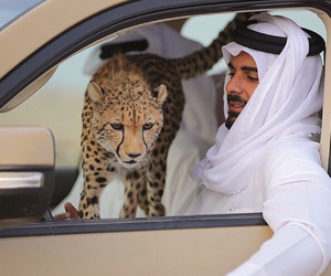 arab and horse image