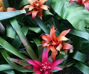 beauty, orange, and green image
