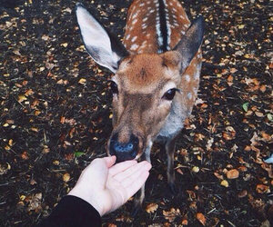 animal, deer, and autumn image
