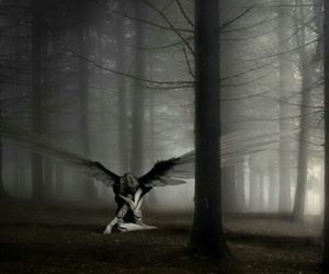 angel, dark, and forest image
