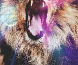 colors, lion, and wallpaper image