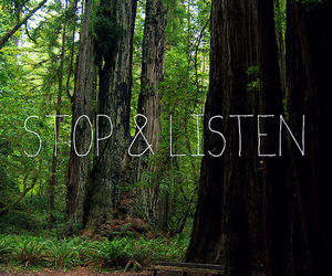 listen, stop, and forest image