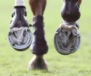 horse, fast, and hoof image