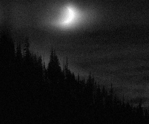 moon, Darkness, and forest image