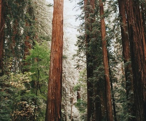 forest, road, and travel image