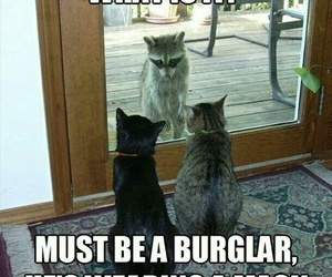 funny, cat, and racoon image