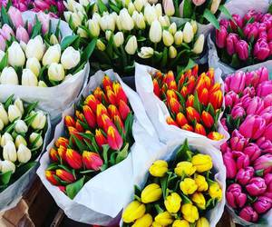 flowers, good morning, and inspiration image