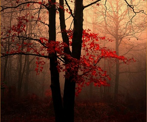 forest, autumn, and tree image