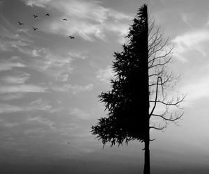 tree, sky, and bird image