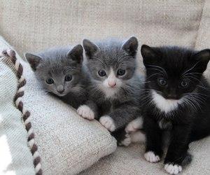kittens image