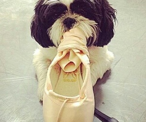 ballet, dog, and pointe image