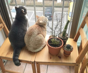 cat, animal, and plants image