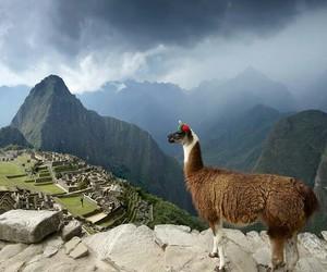 alpaca, machu pichu, and travel image
