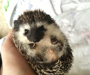 adorable, AHH, and animals image