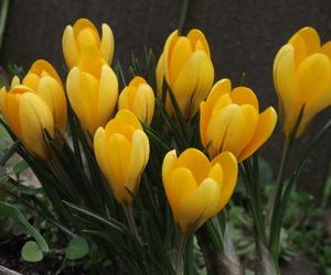 Virag, tavasz, and sárga image