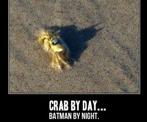 funny, batman, and crab image
