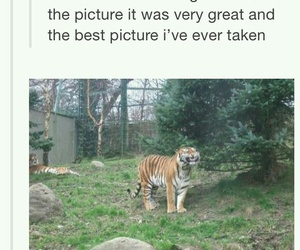 funny, tiger, and tumblr image