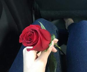 feeling, girl, and rose image