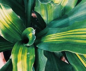 green, naturaleza, and plants image